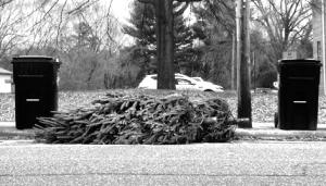 Christmas tree lying on side between two wheelie bins