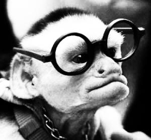 Monkey wearing glasses